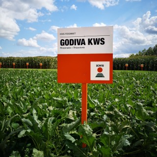 kws_feedbeet_godiva_bord_in_perceel.jpg