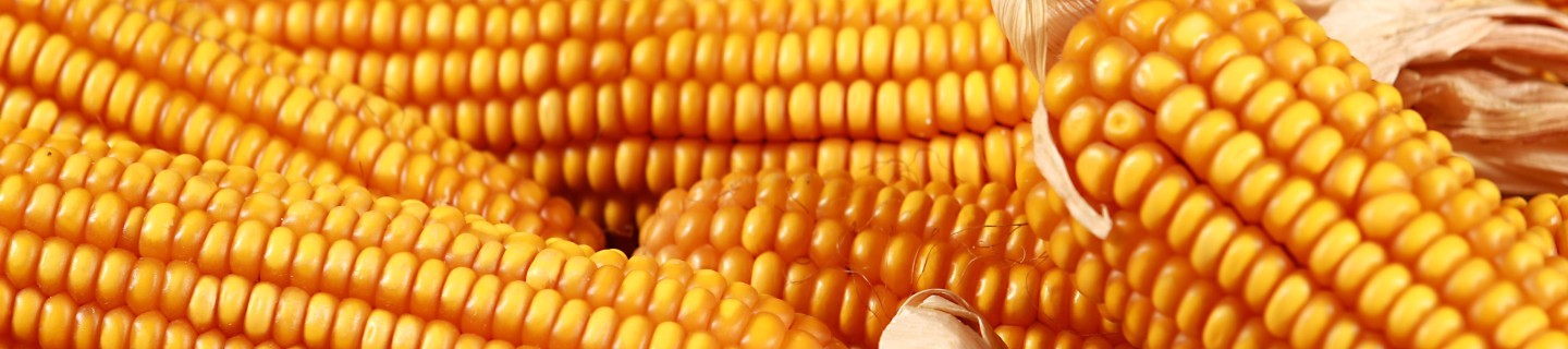 grain-cob-ronaldinio-for-header.jpg