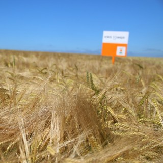 kws_barley_tower_3.jpg