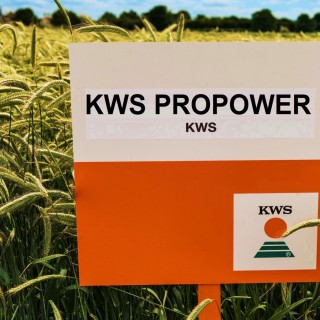 kws_wheat_propower_1.jpg