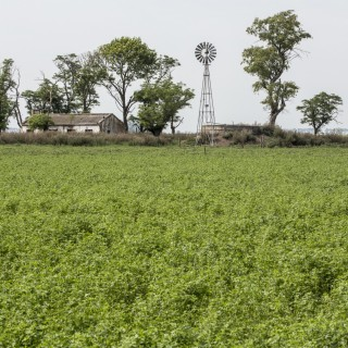 kws_argentina_alfalfa_field_with_house.jpg