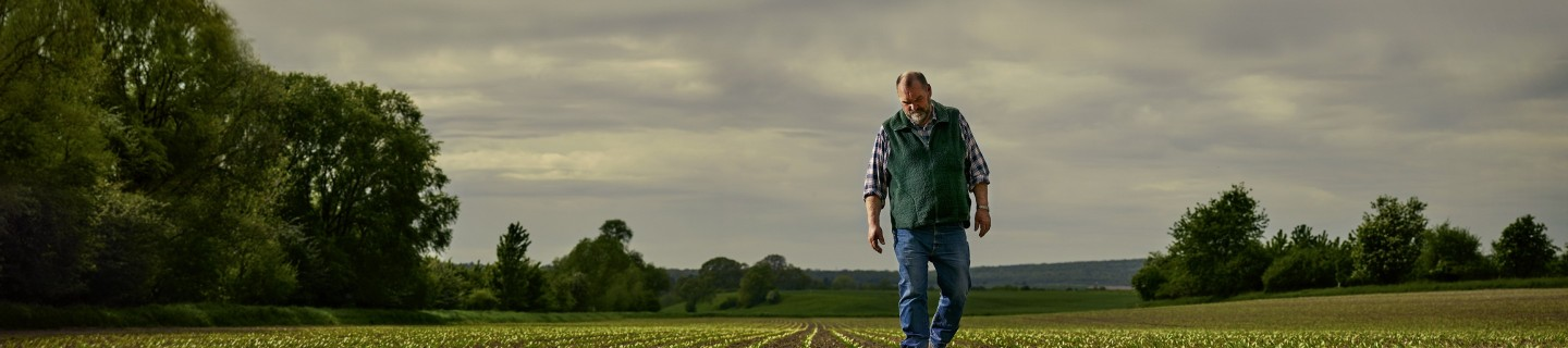 Walking farmer on sugar beet field