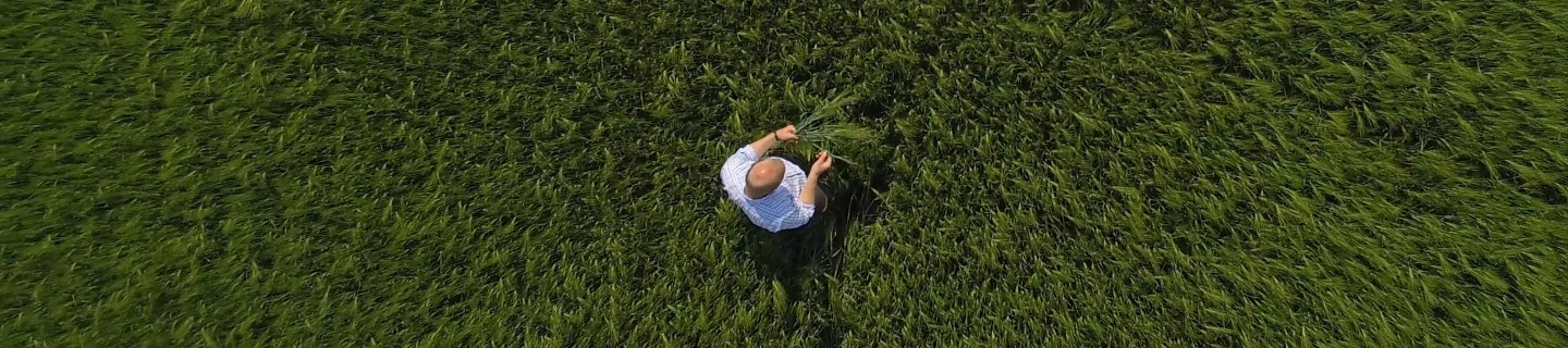 farmer in the cornfield bird's-eye view