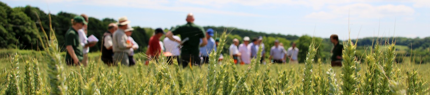 KWS Cereals Event Field